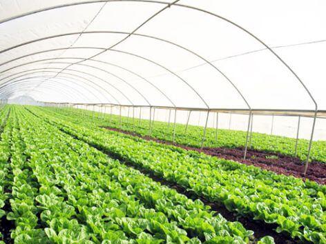 VinGroup với nền nông nghiệp công nghệ cao tại Bắc Ninh