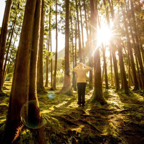 hình ảnh nắng giữa rừng cây