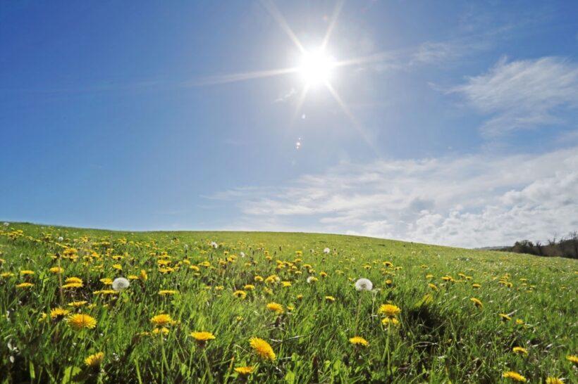 hình ảnh nắng giữa cánh đồng hoa